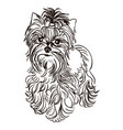 dog breed yorkshire terrier vector image