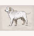 dog labrador retriever beautiful serious animal vector image