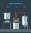 home brewing infographic process vector image