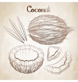 Graphic coconut collection vector image