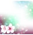 Spring bokeh cherry blossom background vector image