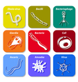 icon cell microb vector image vector image