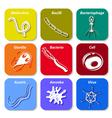 icon cell microb vector image