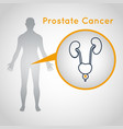 prostate cancer logo icon vector image