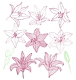 set of hand-drawn lilies vector image