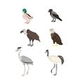 Cartoon set duck crow buzzard eagle crane heron vector image