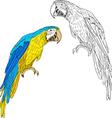 Macaws vector image