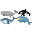 Cartoon whale collection vector image