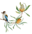 Australian kookaburra bird vector image