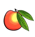 Hand drawn peach with leaves Peach vector image