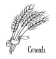 Wheat bread ears cereal crop with ribbon sketch vector image