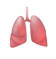realistic human lungs isolated on white background vector image