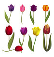 tulips nature spring flower beautiful bouquet vector image