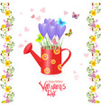 vintage can watering with bouquet of crocus and vector image