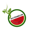 watermelon fruit icons flat style vector image