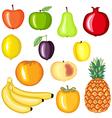 fruit cartoon vector image