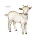 Watercolor hand drawn goat on a white background vector image