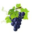 vine black vector image