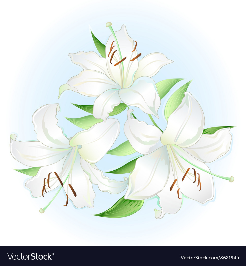 White lilies bouquet vector