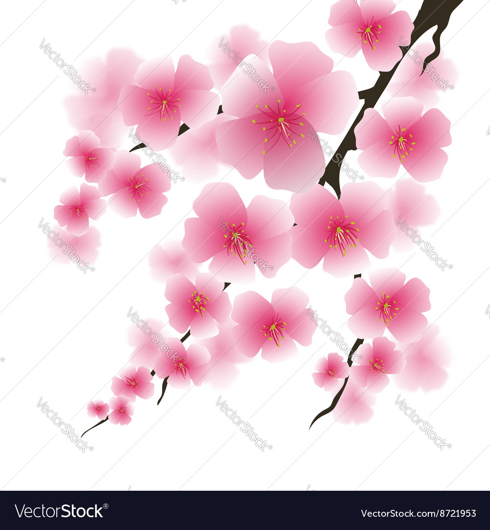 Spring pink flowers vector