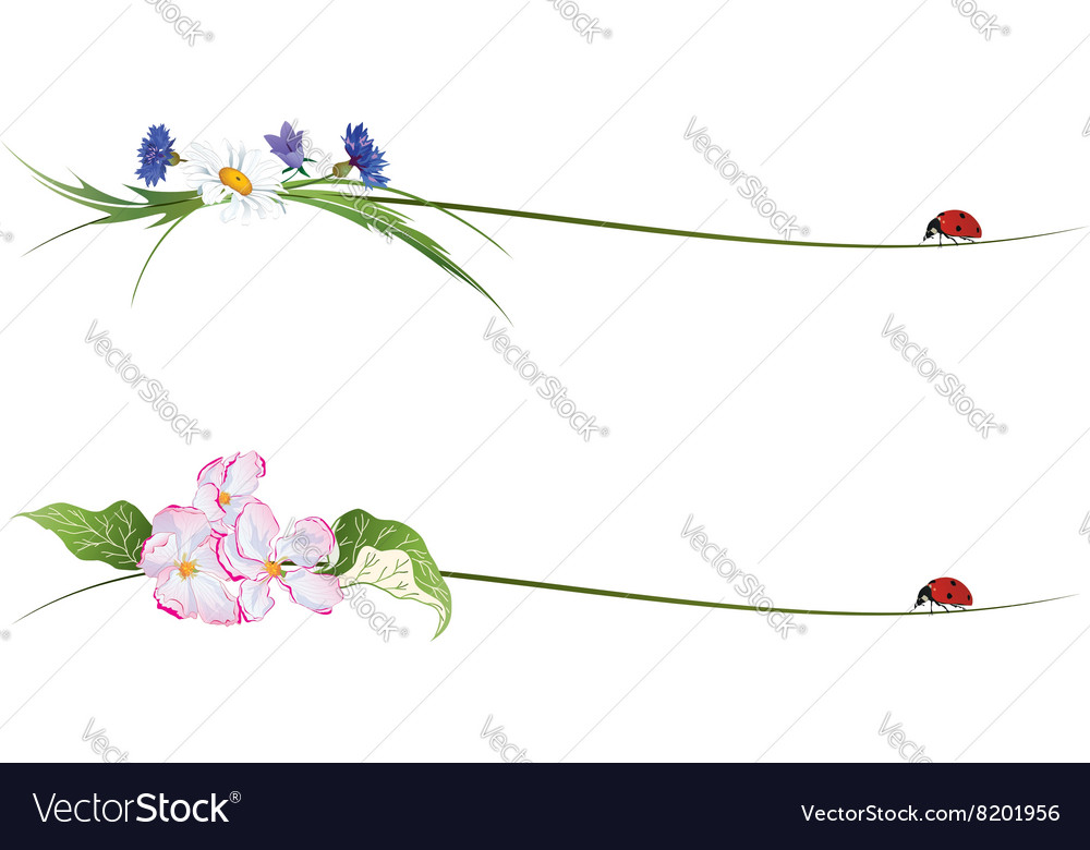 Vignette with flowers and ladybird vector