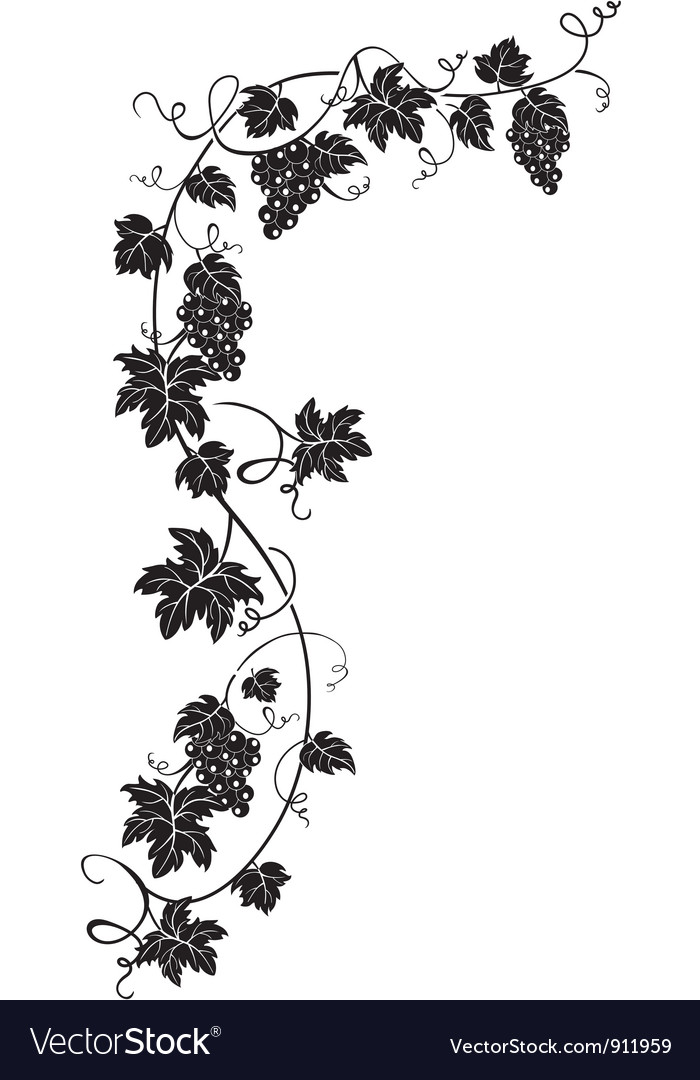 Branch of grapes vector