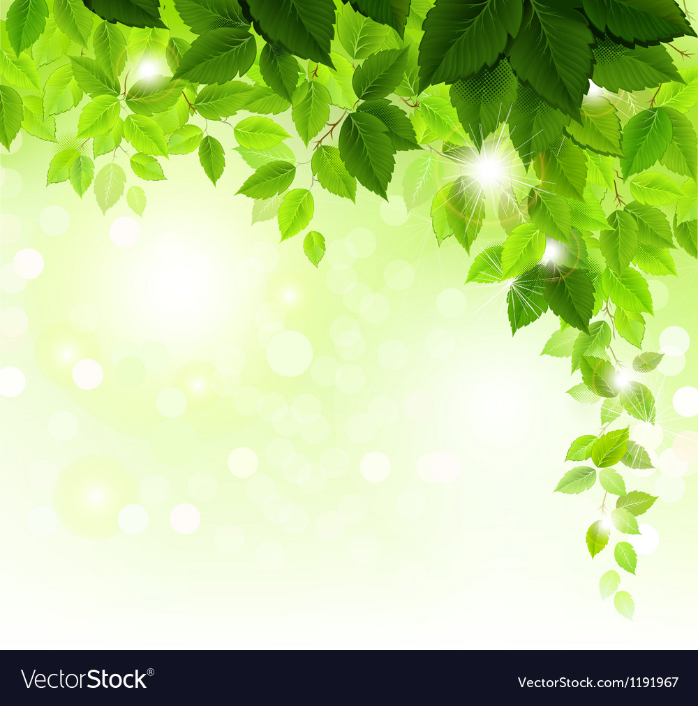 Green leaves vector