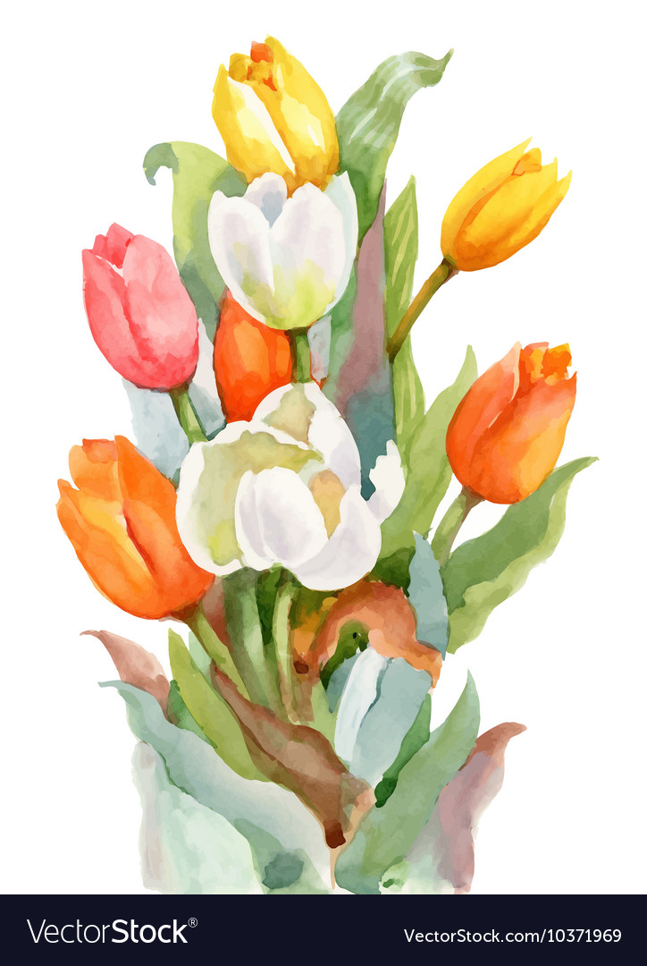 Watercolor summer garden blooming tulips flower on vector
