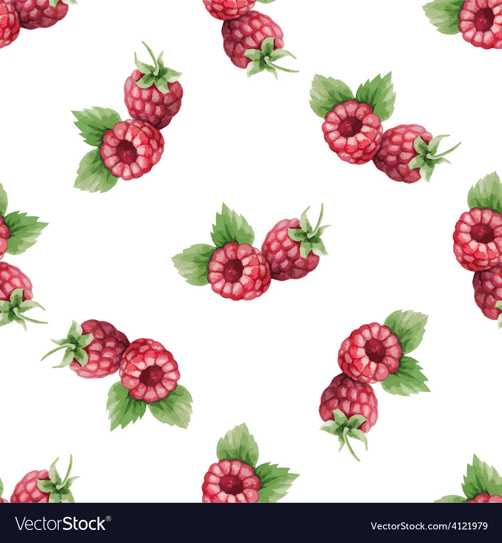 Watercolor pattern of fruit raspberry vector