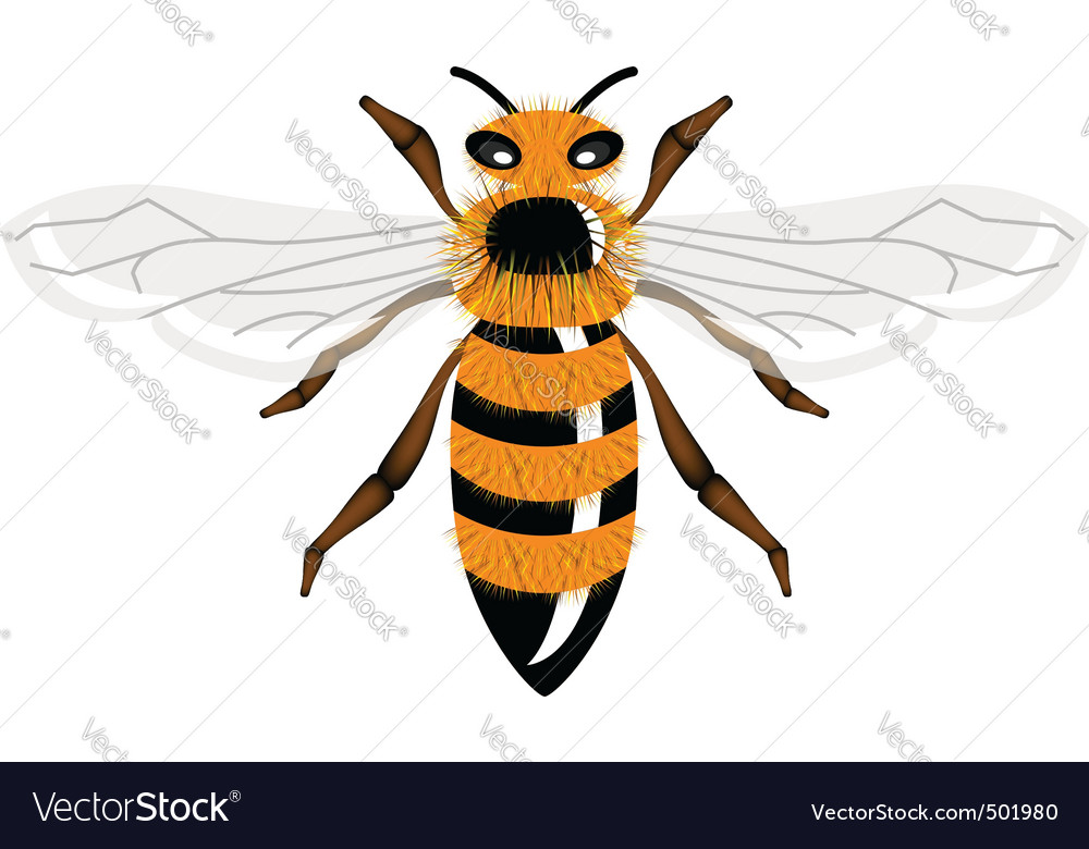 Insect bee vector