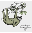 pale throated sloth engraved hand drawn vector image