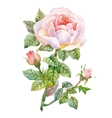 Watercolor garden blooming red roses vector image