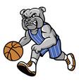 bulldog basketball mascot vector image