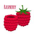 fresh berries sweet raspberryflat vegetarian foo vector image