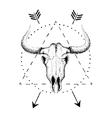 Skull of bull with horns vector image