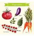 Water color vegetables vector image