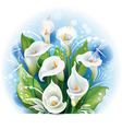 Bouquet of White Calla lilies vector image vector image