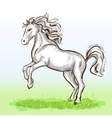 White horse vector image vector image