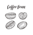 Coffee bean seed natural organic caffeine fruit vector image