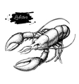 vintage lobster drawing Hand drawn vector image
