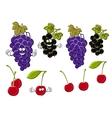 Cartoon grapes cherries black currants fruits vector image
