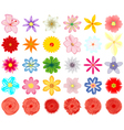 A collection of flowers for the design vector image