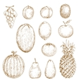 Sketches of fresh harvested fruits vector image