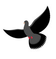 black dove isolated dark pigeon on white vector image