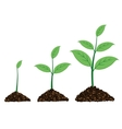 plant grow up in a moment vector image