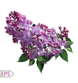 Spring izolate lilac flower for the design vector image