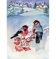 Bullfinch birds on snowy tree branch Watercolor vector image