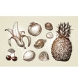 Collection food sketch Hand drawn fruits such as vector image