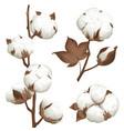 cotton plant boll realistic set vector image