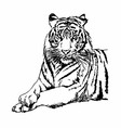 Tigers Clipart and Stock vector image